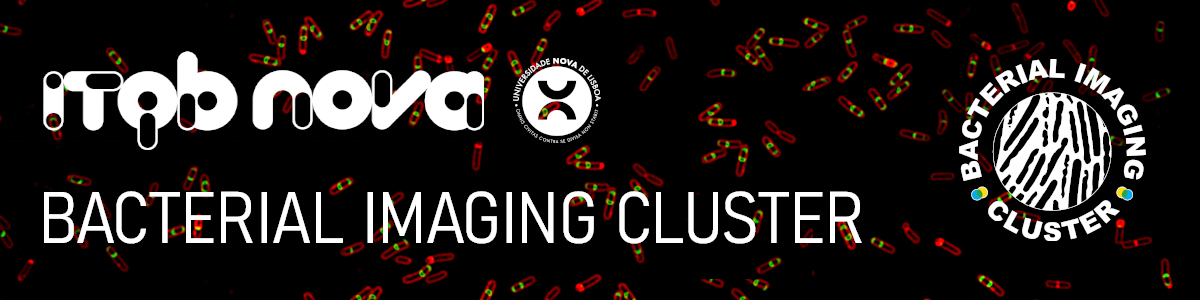 Bacterial Imaging Cluster