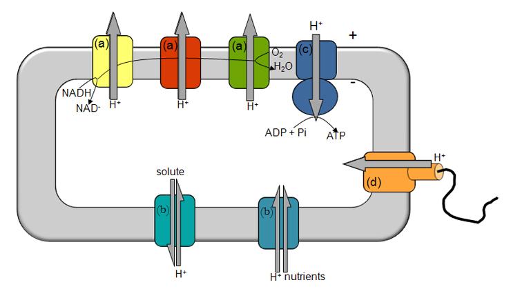 Intro - Figure 1