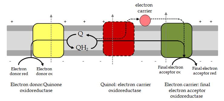 Intro - Figure 2