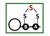A fresh look at sulfur metabolism