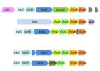 A new family of proteins for energy metabolism