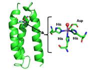 Designing enzyme mimics
