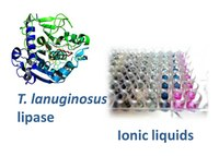 How will enzymes behave in ionic liquids?