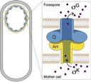 Intercellular communication 101