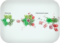 New approaches to disordered proteins