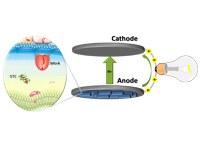 Optimizing microbial fuel cells