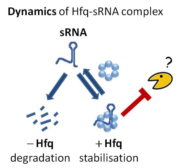 Who Killed RNA