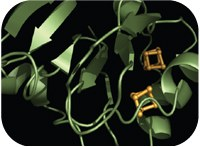 Protein Folding and Metal Ions