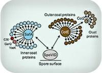 Proteins always find a way