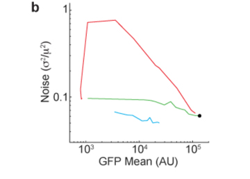 """Reducing """"noise"""" in gene expression"""