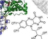Understanding the role of vitamin B2 in lipid metabolism diseases